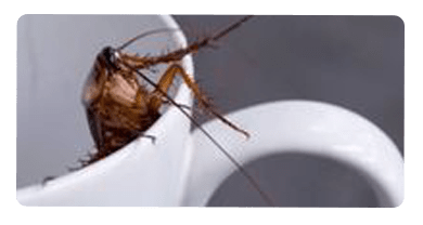 Cockroach Control Altona